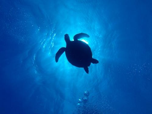 ウミガメの画像 p1_40